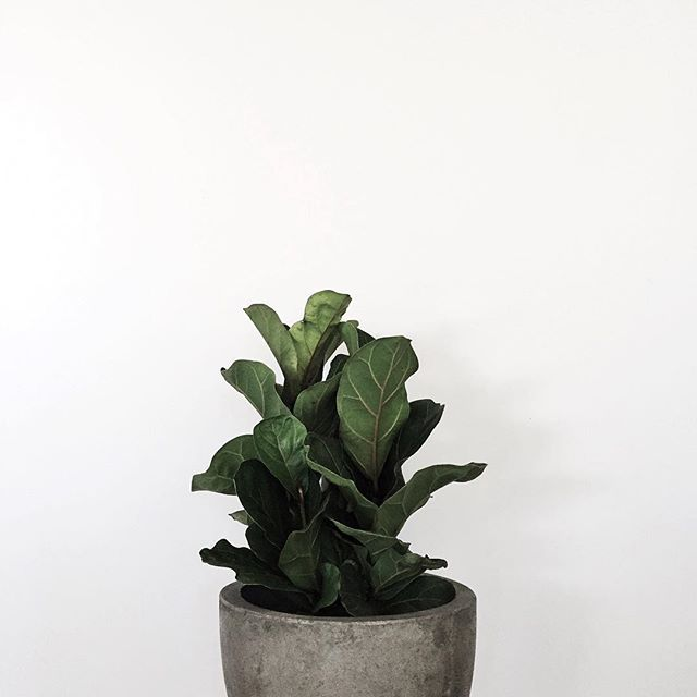 concrete // green