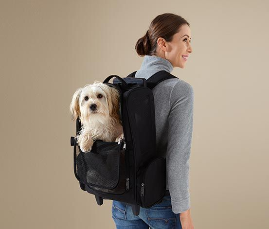 cool stuff for #dogs