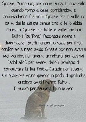Frasi Sui Cani Da Tatuare.Immagini Con Frasi Aforismi E Citazioni Sui Cani Citazioni Sui Cani Cuccioli Di Cani Citazioni Sugli Animali