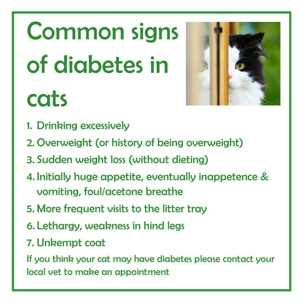 Food for Diabetic Cats Understanding food can save your