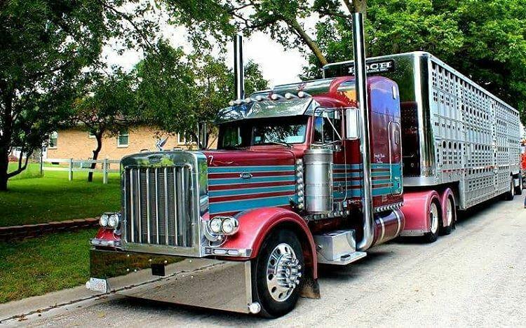 Peterbilt Custom 379 Bull Hauler With Images Peterbilt Trucks