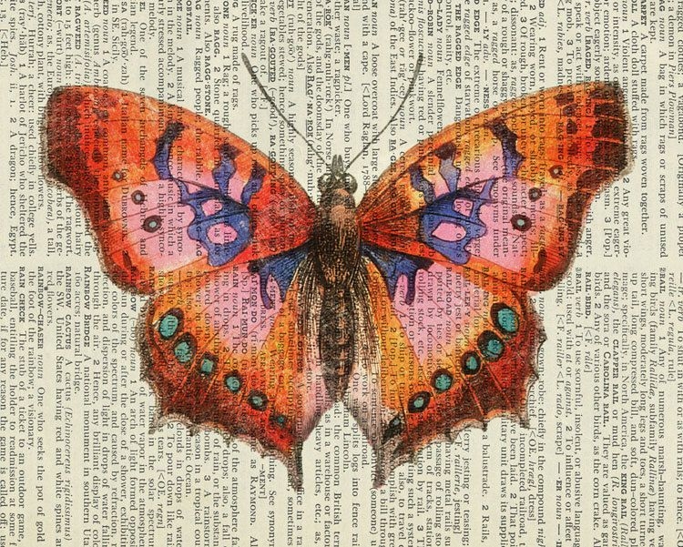 Butterfly - vintage pink butterfly artwork printed on old dictionary page. $12.00, via Etsy.