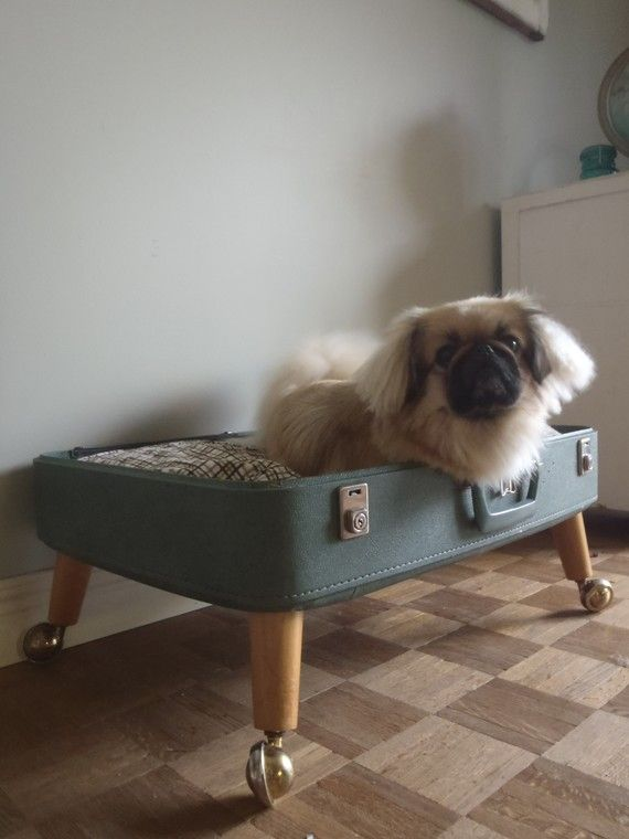 Suitcase Dog Cat Bed Wouf Wouf Wrouf Wouaaaaf Pinterest
