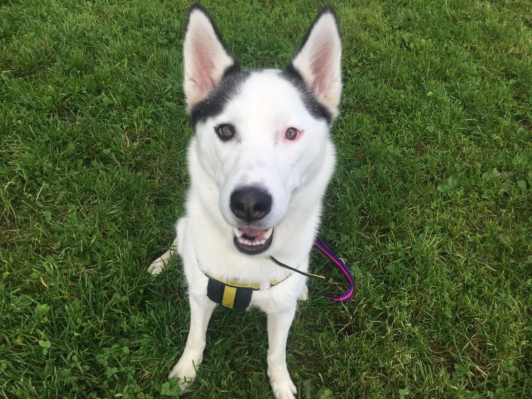 Looking at Alaska dogstrust rehomeadog Dogs, Dog