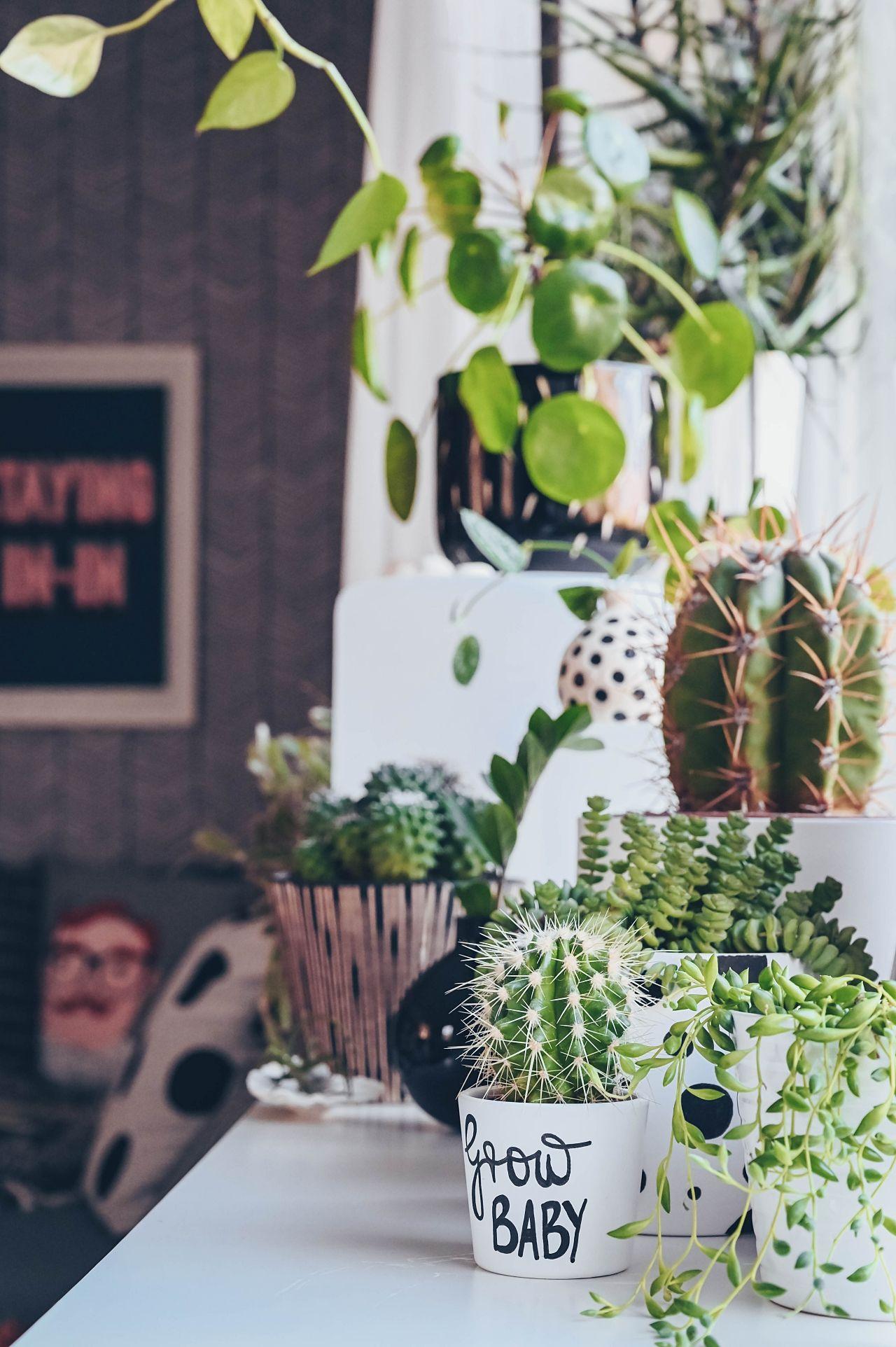 fr hlingskur im potted urban jungle tipps zum zimmerpflanzen umtopfen pflanzen