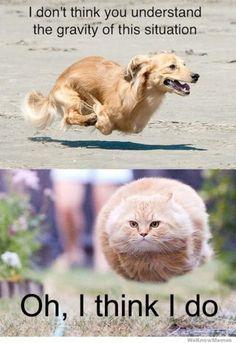 a29ba74233c8744753fb501fe180e529 flying cat ball google search memes pinterest