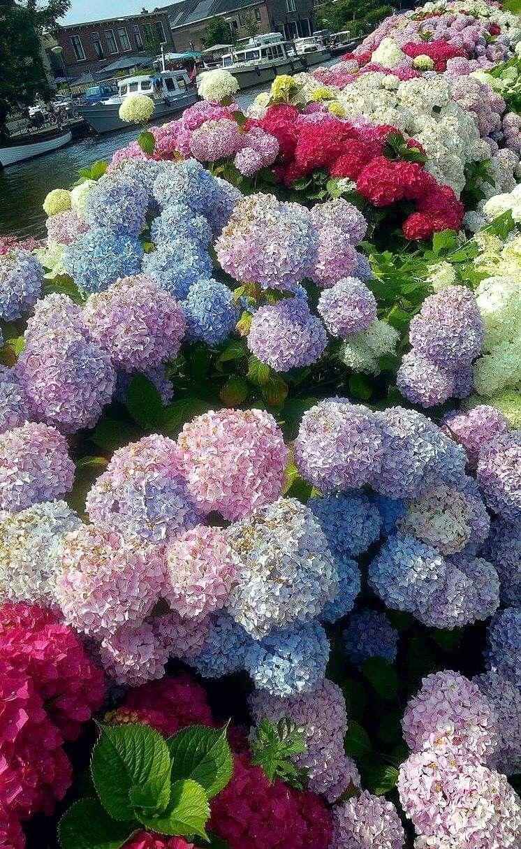 Pin By Camila On Creazione Di Geova Sempre Fantastica In 2020 Beautiful Flowers Amazing Flowers Planting Flowers