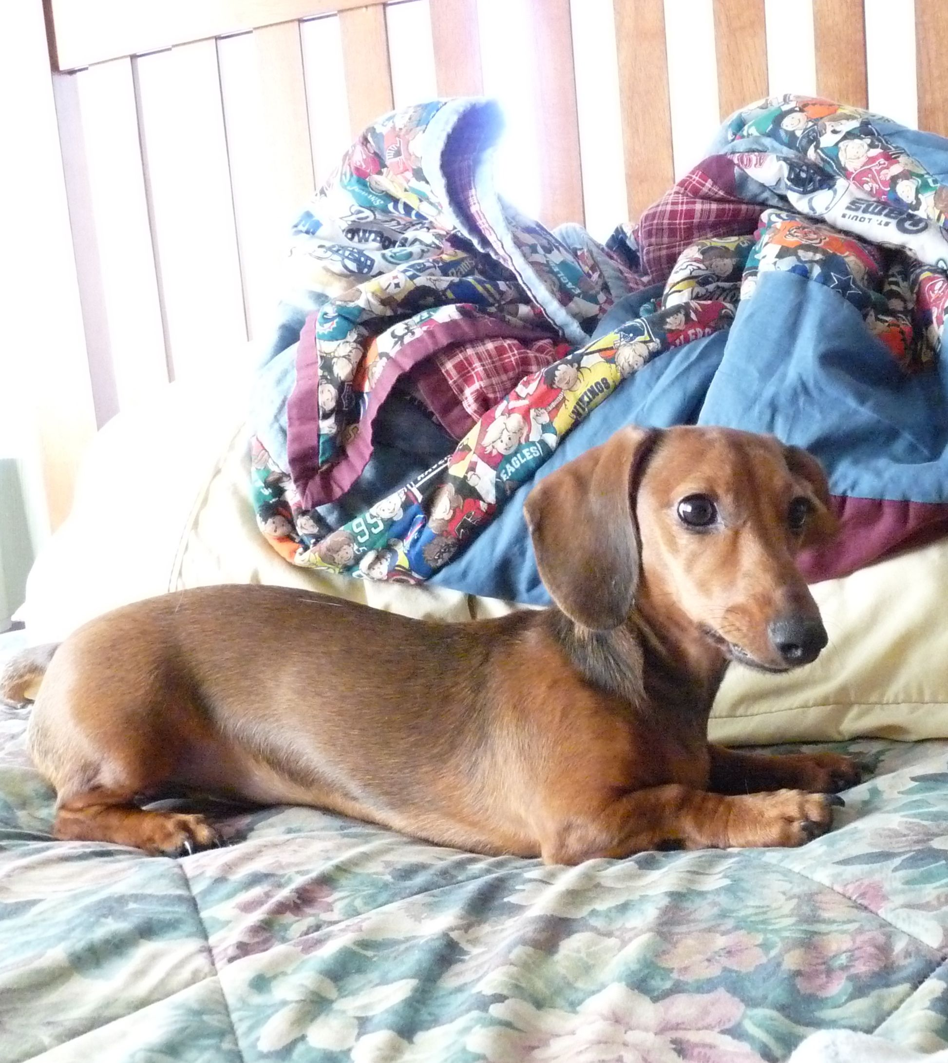 Wubbzy Dachshund Doxie Rainbow Bridge
