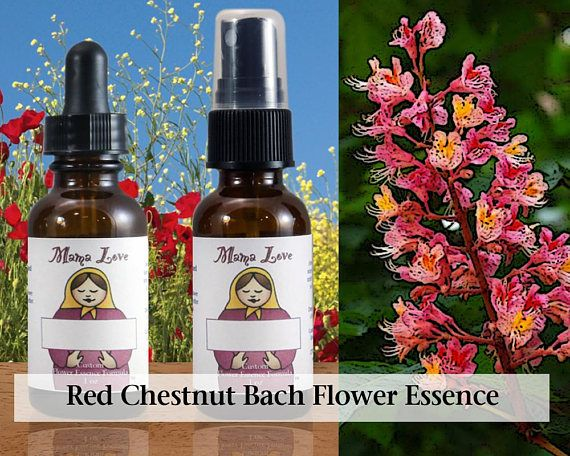 Red Chestnut Bach Flower Essence Reiki Infused 1 Or 2 Oz Etsy Flower Essences Lily Flower Peppermint