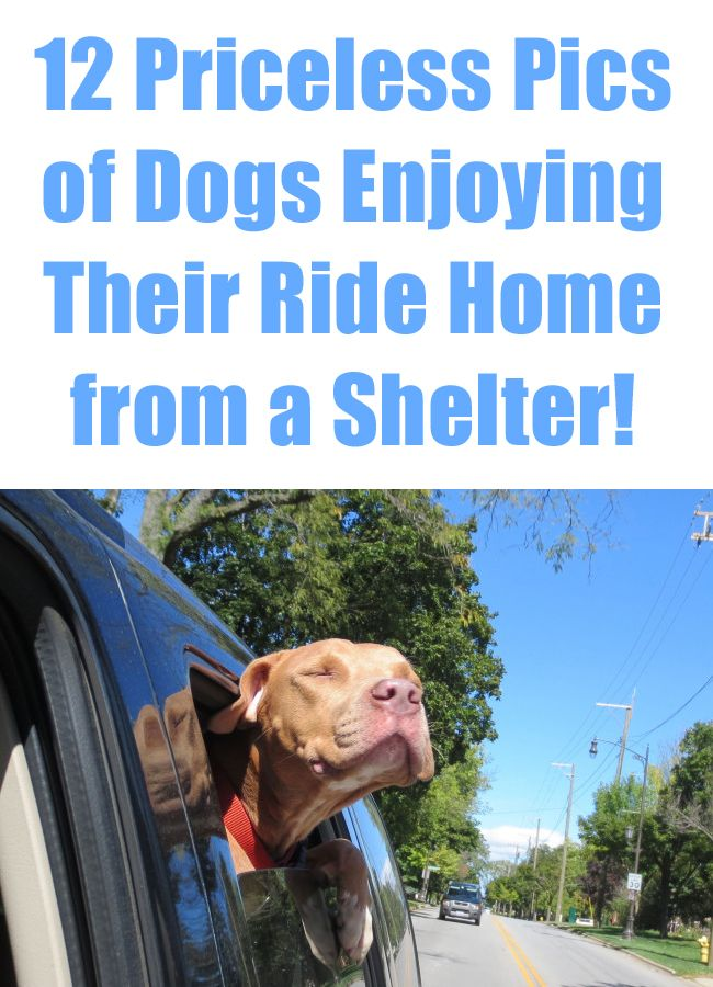 These pics will make your day. No actually, your whole WEEK! http://theilovedogssite.com/12-priceless-photos-of-dogs-enjoying-their-ride-home-from-a-shelter/