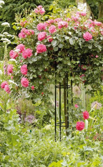 rosengarten gestalten und anlegen kletterrosen rosengarten und rose. Black Bedroom Furniture Sets. Home Design Ideas