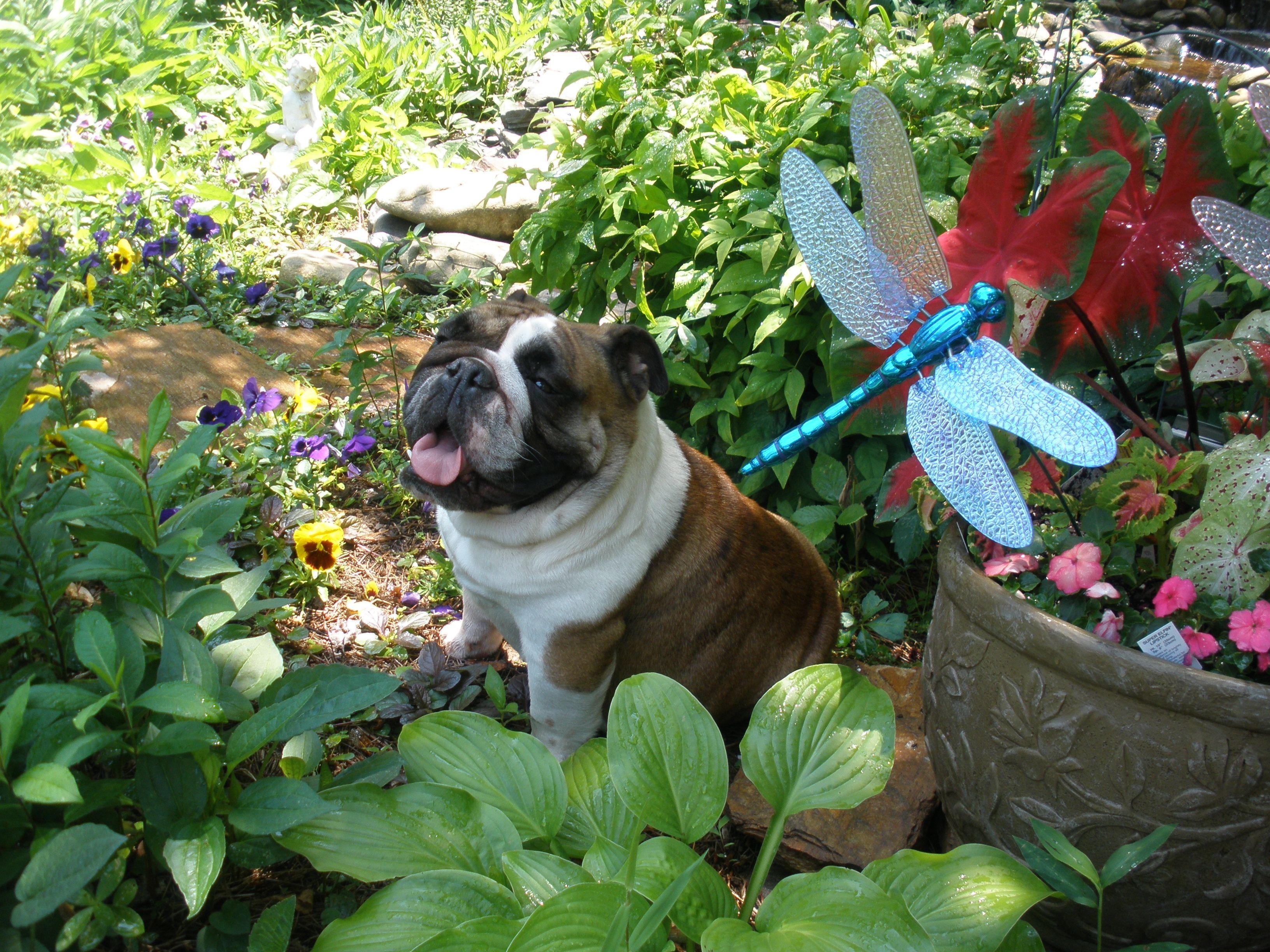 Lindsey in the garden
