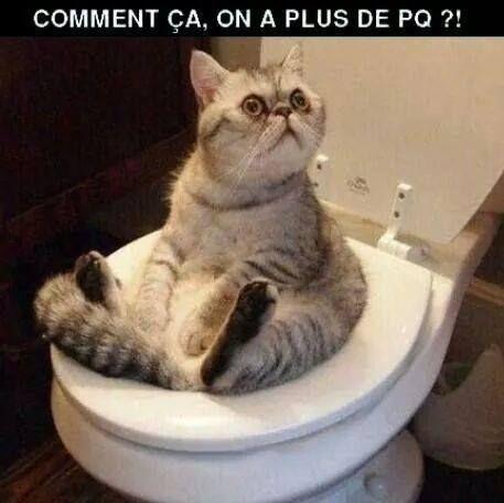 image drole chat chats cats pinterest les toilettes savez vous et besoin. Black Bedroom Furniture Sets. Home Design Ideas