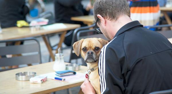 3 grote trends voor bloggers. Deze blogpost gaat over bloggen en trends, wat je hier leest kun je ook op andere gebieden toepassen.  #bloggen #trends #trendwatching #dog #coddle http://trendbubbles.nl/3-grote-trends-voor-bloggers/