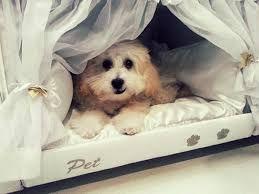 Resultado de imagen para camas lujosas para perros