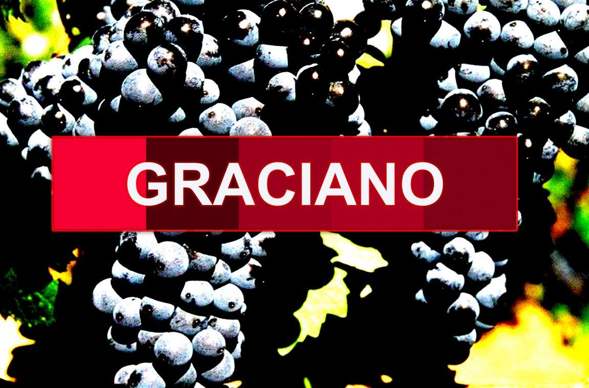 Uva Graciano Caracteristicas Historia Potencial Enologico Uvas Vino Wine Lovers
