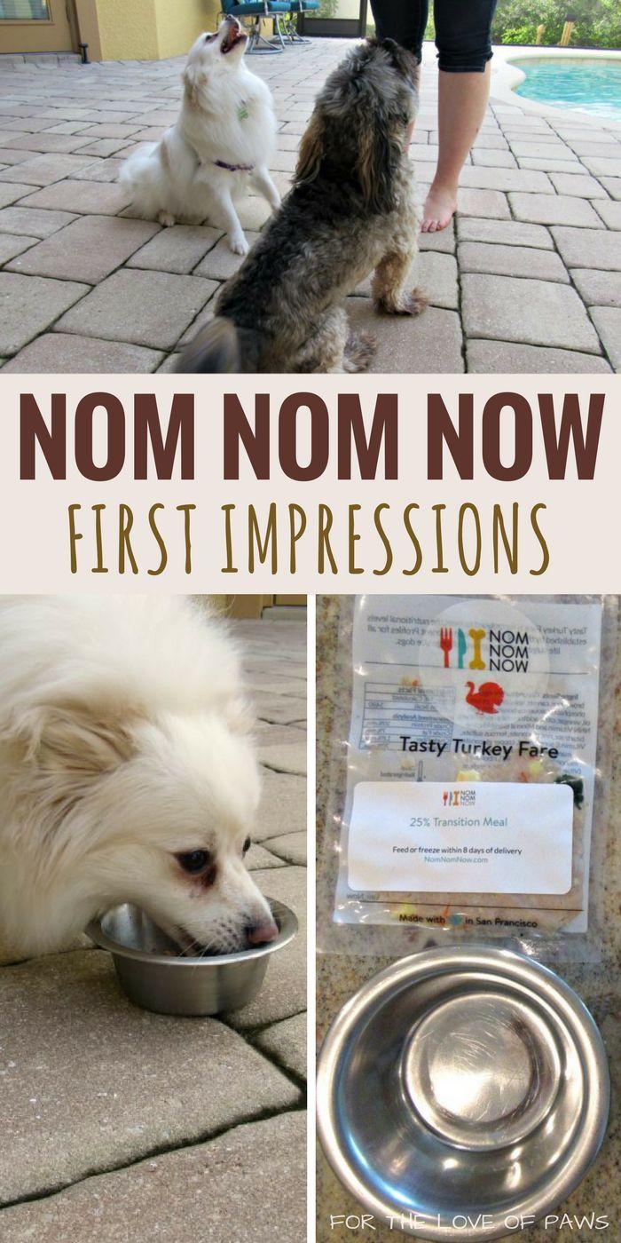 Nomnomnow Review First Impressions Make Dog Food Dog Food Recipes Dog Care