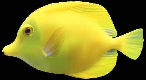 Yellow Zebrasomatang Fish Png Clipart Fish Yellow Fish Under The Sea Costumes