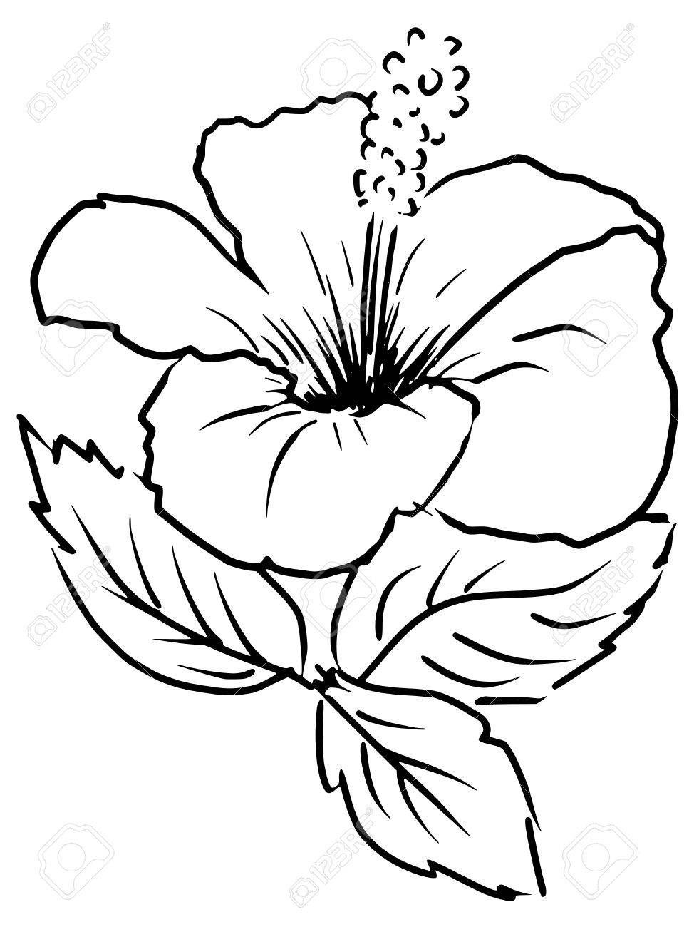 صور ورد للتلوين جهازة للطباعة لتنمية قدرات الأطفال بفبوف Flower Coloring Sheets Vector Flowers Vector Background Pattern