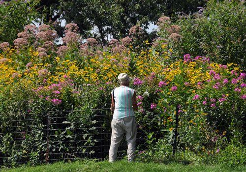 Bon Central Parku0027s Secret Butterfly Garden