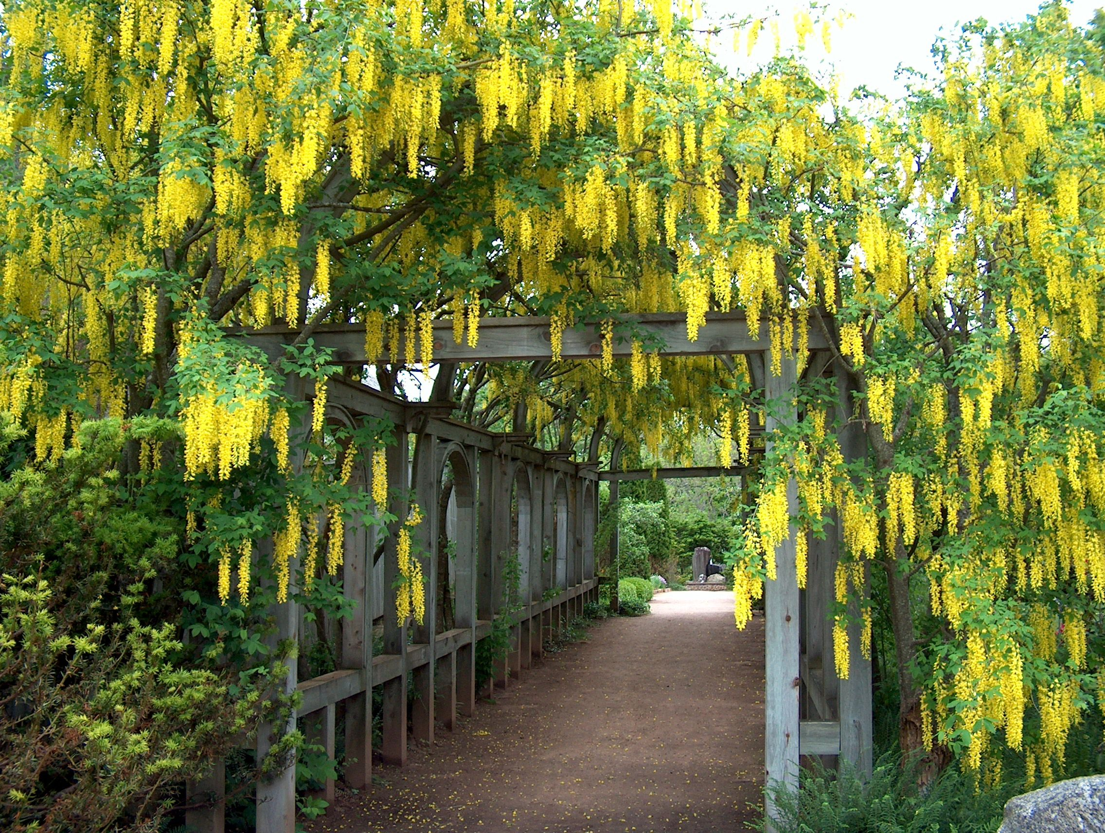 Annapolis Royal Historic Gardens, Annapolis Royal Picture: Laburnum Arbour    Check Out TripAdvisor Membersu0027 Candid Photos And Videos Of Annapolis  Royal ...