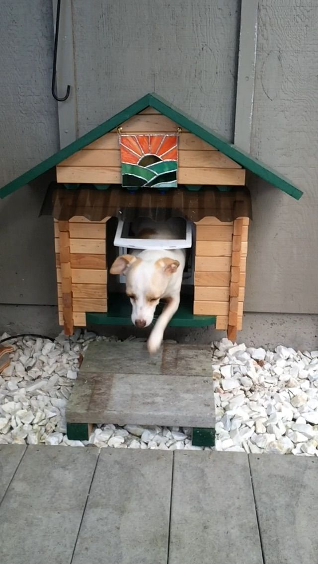 Made A Shallow House To Protect The Dog Door From The Rain The