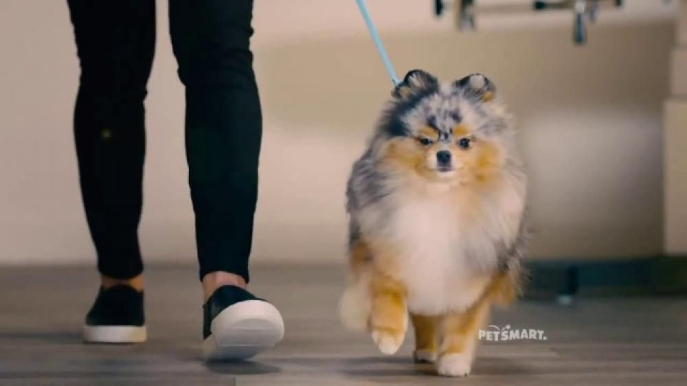 These Freshly Groomed Dogs Are Looking Great While They Hit The Runway Petsmart Has Professional In House Groomers W Petsmart Grooming Petsmart Meghan Trainor