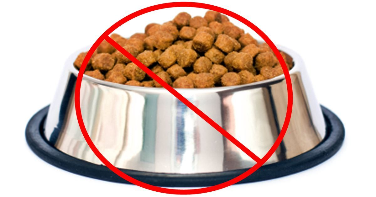 Breaking News Popular Dog Food Brand Issues Recall Due To Small