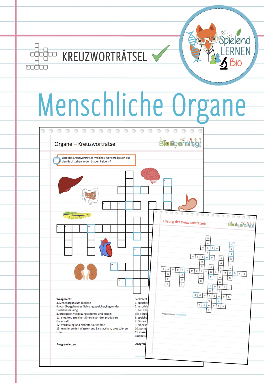 Organe Kreuzwortratsel Unterrichtsmaterial Im Fach Biologie Unterrichtsmaterial Biologie Kreuzwortratsel