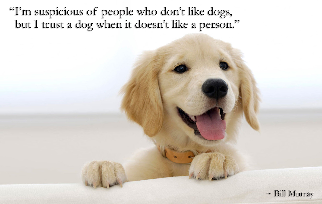 Tokenpet On Twitter Dog Quotes Dog Quotes Love Dog Quotes Funny