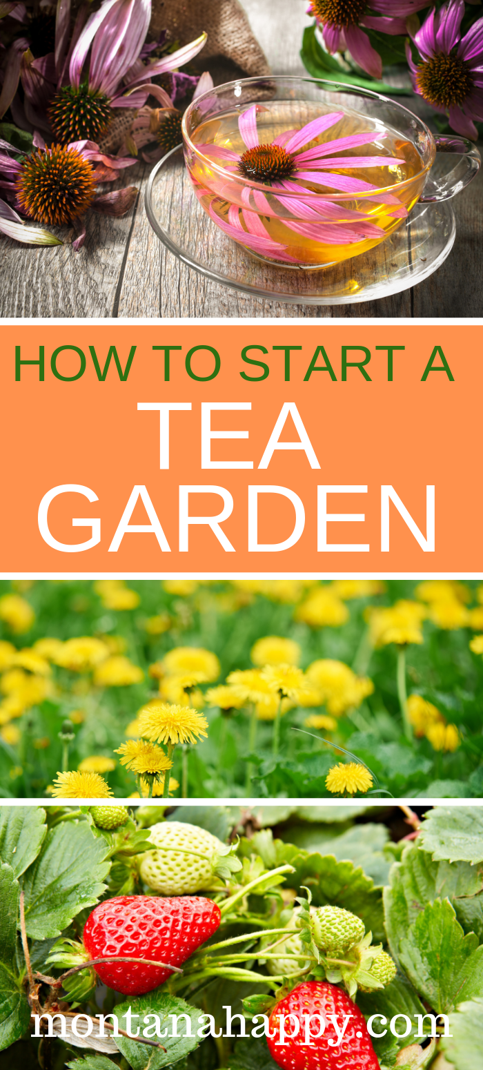 How to Start a Tea Garden will give you options on tea