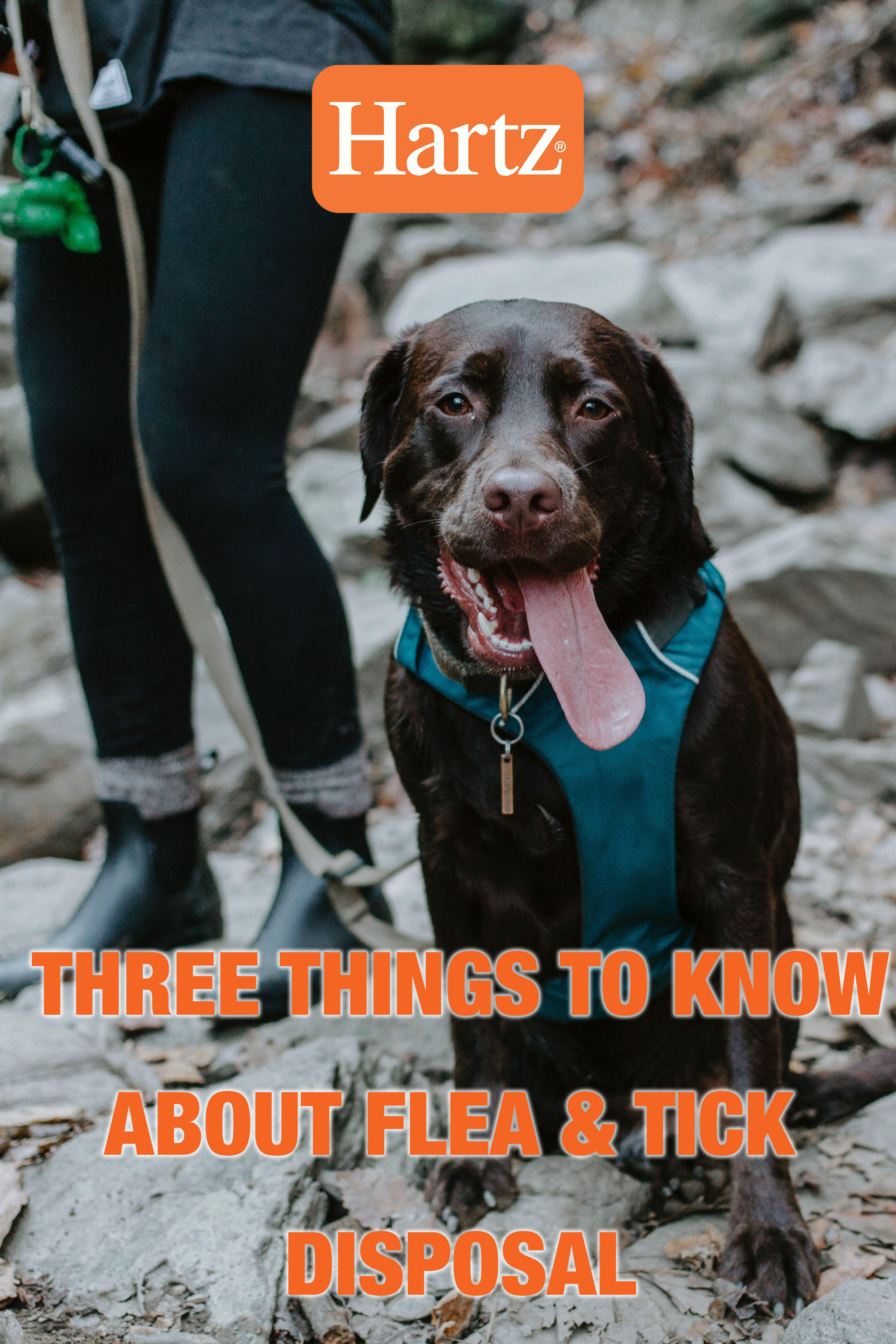 Three Things To Know About Flea And Tick Disposal In 2020 Fleas Flea And Tick Ticks