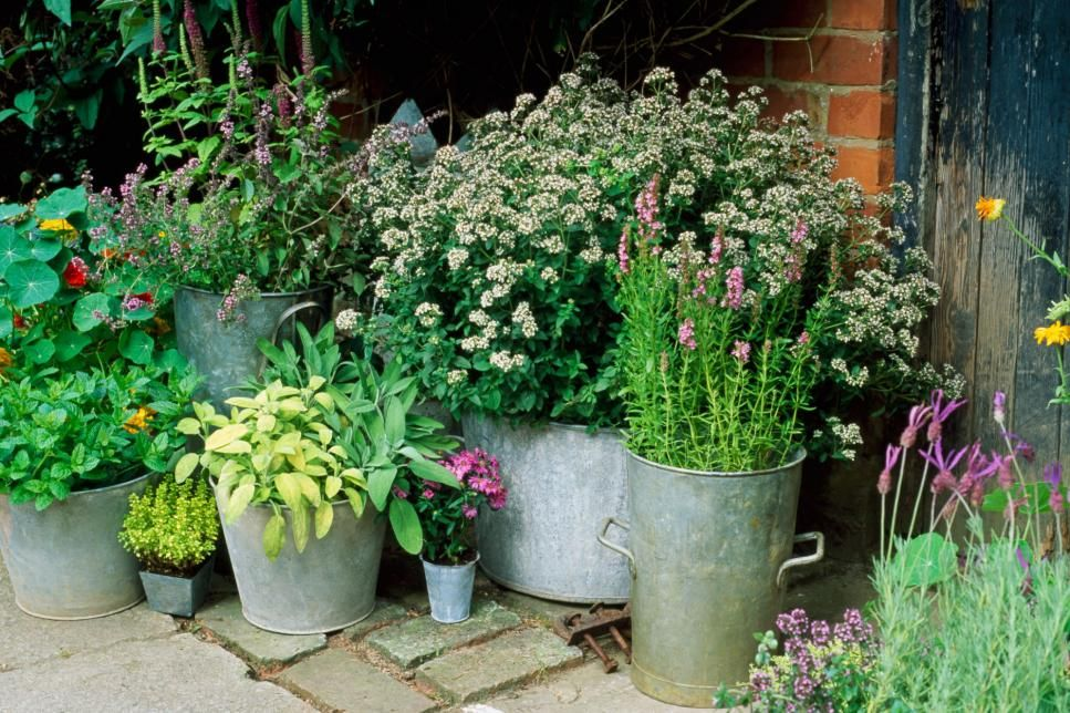 Fragrant Herb Container Combinations Hgtv Herb Containers Small Space Gardening Cottage Garden