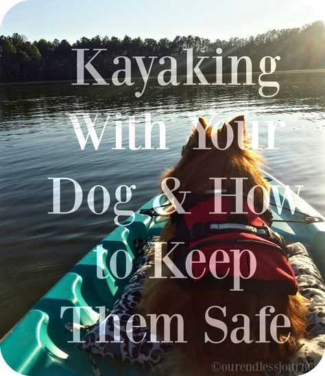 Photo of Way to keep your dog safe while kayaking and the life jacket I most recommend fo…