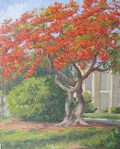 "Royal Poinciana on 6th St. S. by Linda Apriletti Oil ~ 10"" x 8"""