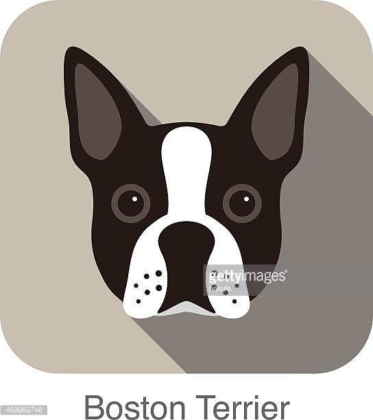 ボストンテリア犬の顔のポートレートフラットアイコンのデザイン