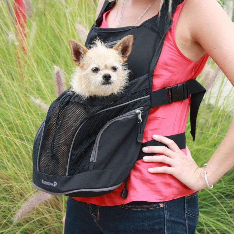 Small Dog Backpack Carriers | ... leather dog leashes retractable ...