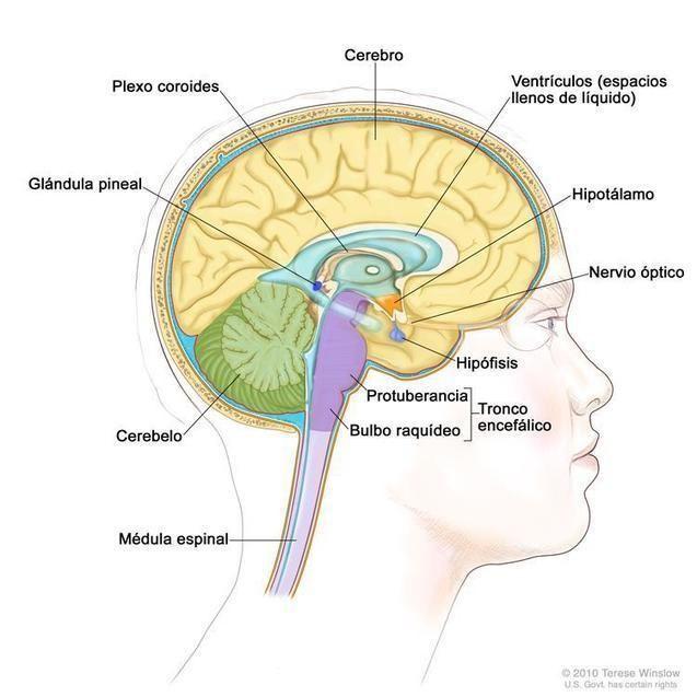 Los Tumores De Hipfisis Se Dividen En Los Tres Grupos Siguientes
