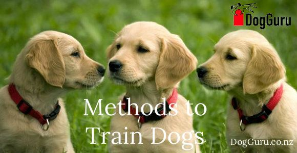The Dog Obedience Training Classes Are Great Fun And Are