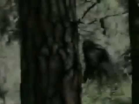 Real Bigfoot Sighting | All Things Real, Fake or just ...