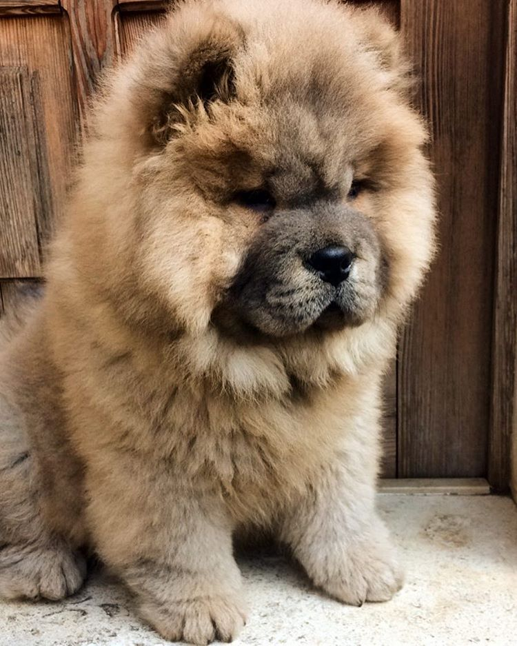 Pinterest Lilyxritter Puppies Cute Dogs Cute Baby Animals
