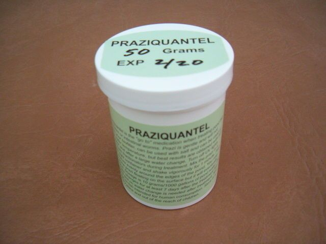 fish pond supplies 134750 praziquantel prazi 50 grams buy it