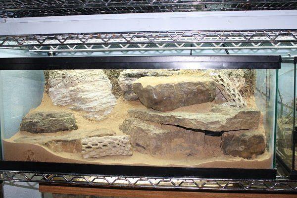 leopard gecko terrarium gecko geek pinterest gecko terrarium geckos and terraria. Black Bedroom Furniture Sets. Home Design Ideas