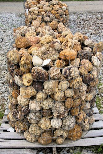 In Indiana, every third house has a bucket of geodes in ...