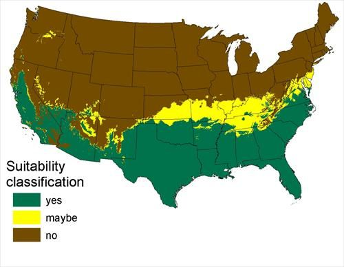 Map Of Projected Range Of PYTHONS In The US By Based On - Black widow spider us map