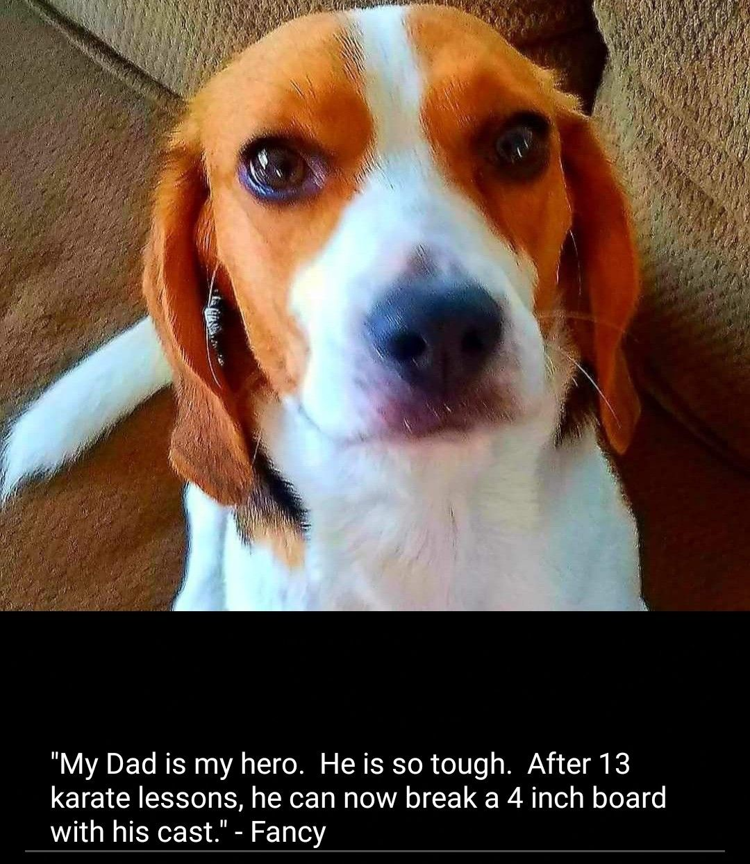Pin By Mark Whitecotton On Beagle Memes Beagle Puppy Beagle