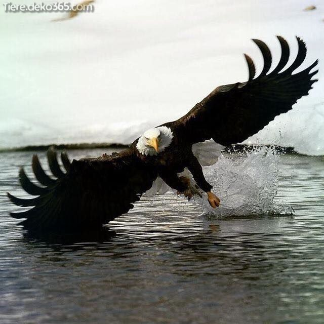 Photo of De superbes photos d'Adler
