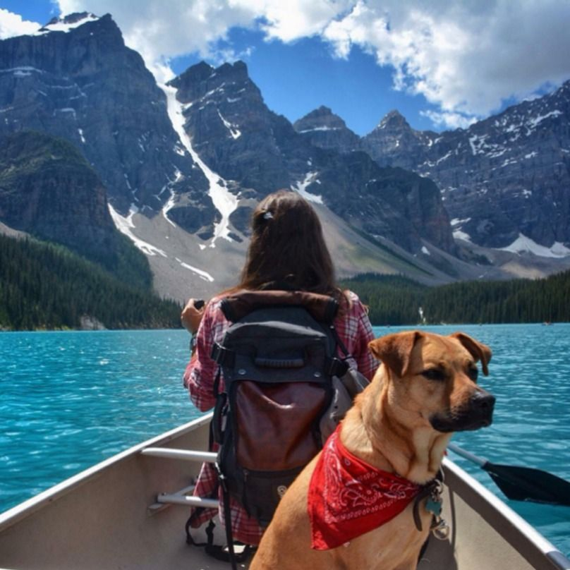 19 Camping Dogs Who Should Have Just Stayed In The City ...