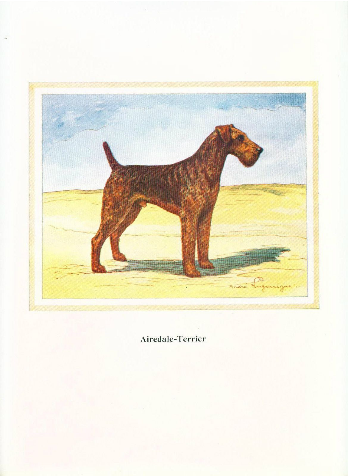 Old French Airedale Print Dog Print Airedale Terrier Limited