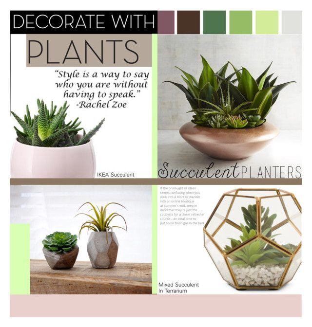 """""""Succulent Designs"""" by wuzzyswardrobe ❤ liked on Polyvore featuring interior, interiors, interior design, home, home decor, interior decorating, Pier 1 Imports, plants and planters"""